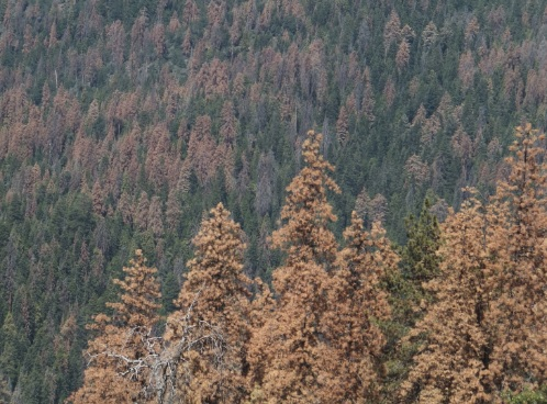 ¿La sequía mata a los árboles de sed o de hambre?