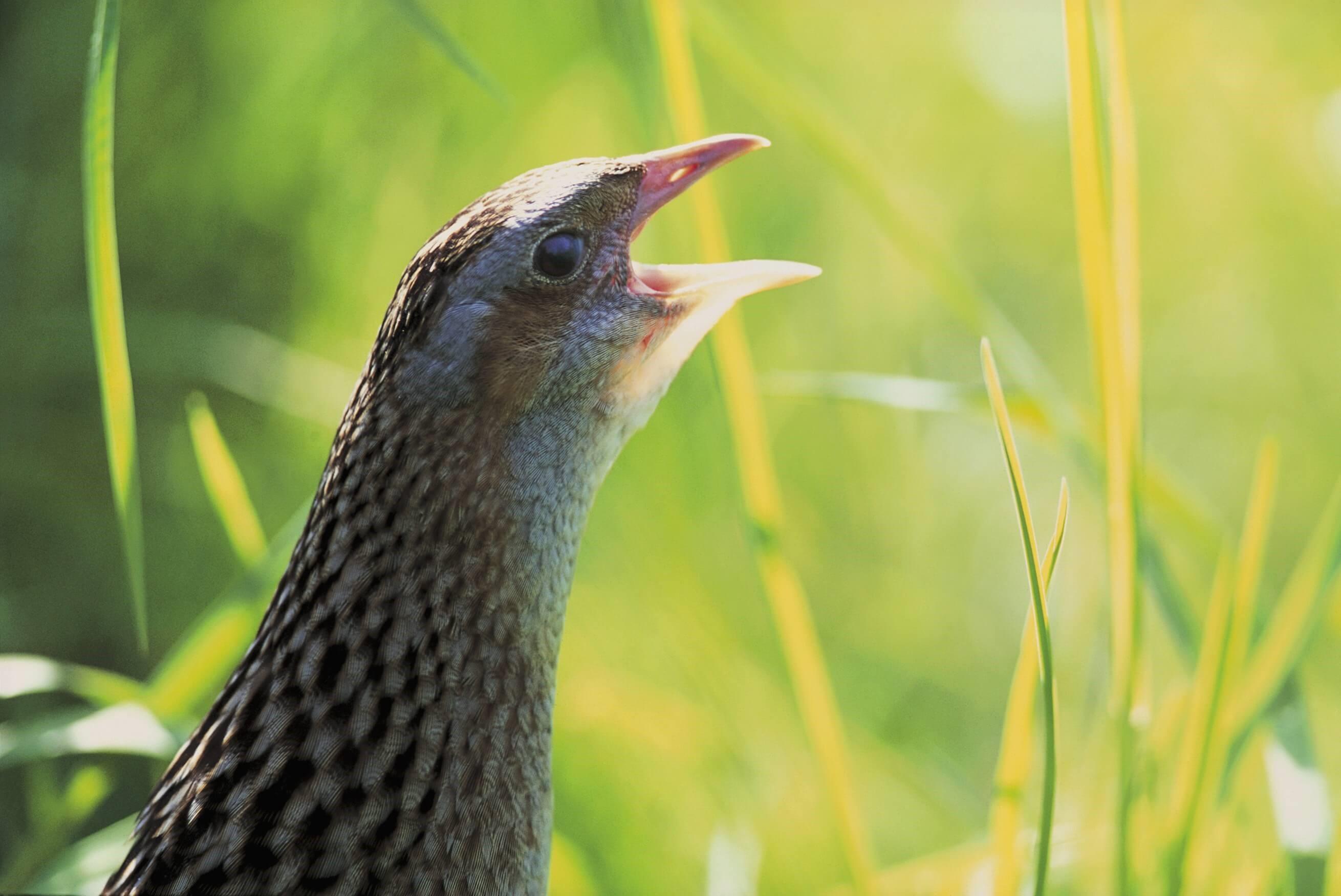 Navarra quiere mejorar la biodiversidad en las zonas agrícolas