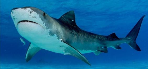 El 90% de las especies con mayor masa corporal están en peligro de extinción