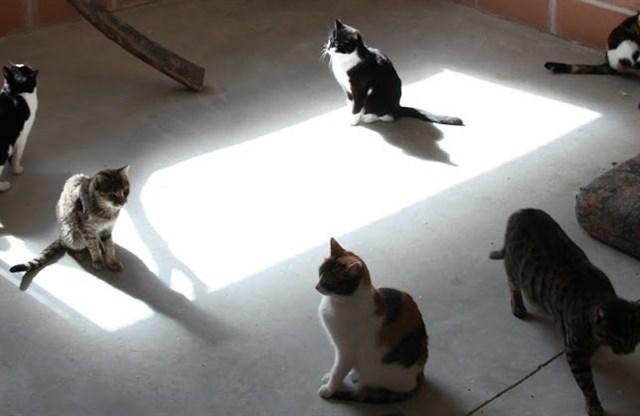 Un senador de Compromís pide al Gobierno que AENA controle las colonias de gatos en los aeropuertos