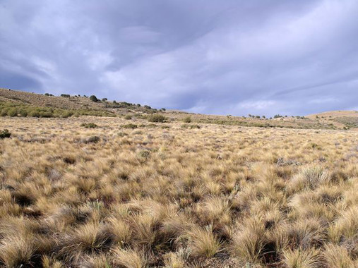 La distribución de las plantas en un paisaje podría usarse como un indicador de los efectos del calentamiento global
