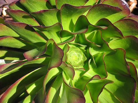 Una de cada cinco plantas del mundo, en riesgo de extinción