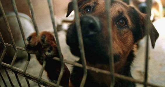 California está a un paso de prohibir la venta de animales de raza en veterinarias