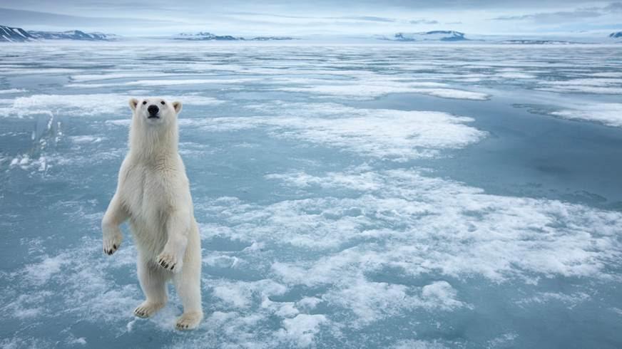 Europa reclama proteger el ecosistema del Ártico de la explotación