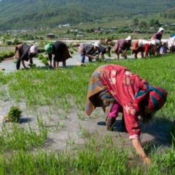 Bhutan,el primer país del mundo con el 100% de su agricultura ecológica