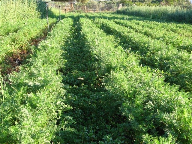 Los agricultores orgánicos europeos lanzan una hoja de ruta para implementar su 'Visión Ecológica 2030'
