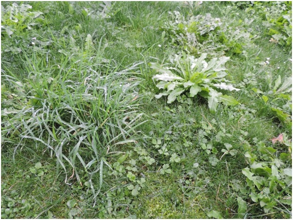 6 herbicidas naturales, ecoamigables y hechos en casa