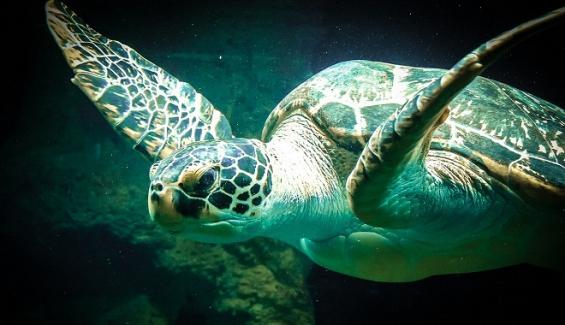 Colombia: Científicos estudiarán especies marinas en Cartagena para impulsar las energías limpias
