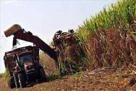 Plantas bioeléctricas, perspectiva de generar energía limpia en Cuba