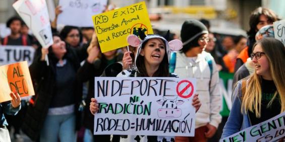 Chile vuelve a marchar en rechazo al rodeo
