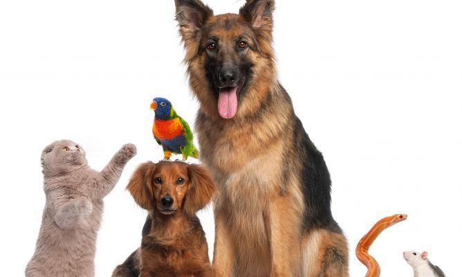 Crece el número de animales de compañía en los hogares de Baleares