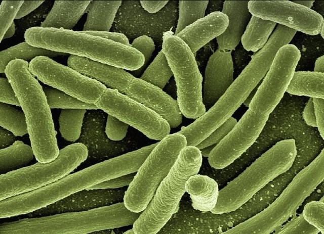 Más de 27.000 muestras catalogan la diversidad de microorganismos en la Tierra