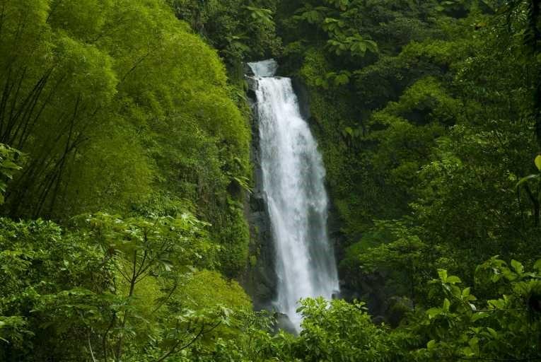 Bosques espectaculares y las amenazas a sus ecosistemas