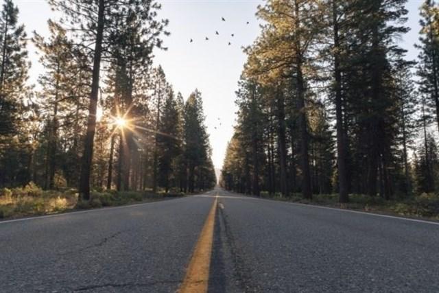 Las aves rehuyen las carreteras por miedo a los predadores o porque creen que son fronteras, según un estudio