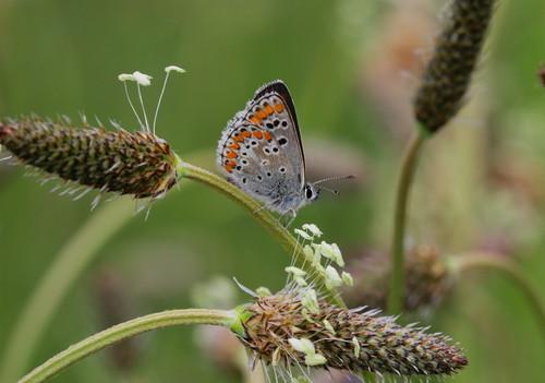 La provincia de Palencia alberga 1.015 especies de mariposas