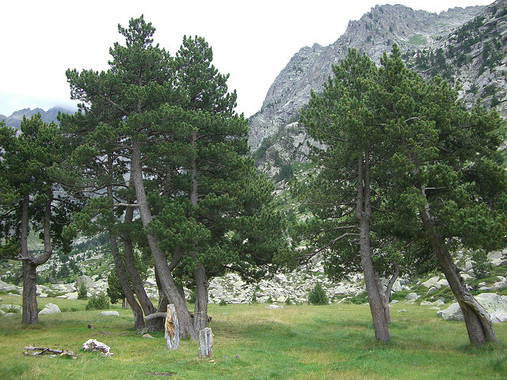 El cambio climático pone en la 'picota' los bosques ibéricos