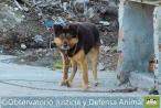 Nace 'Alerta Animal', la primera  App para denunciar en España casos de maltrato animal desde el móvil