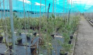 Agentes de Medio Ambiente participan en reforestaciones con centros escolares