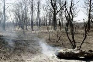 Los parados podrán ser movilizados para limpiar zonas arrasadas por los fuegos forestales