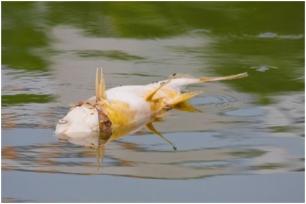 Agua contaminada de Europa mata a la fauna y la flora local
