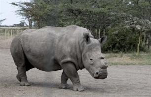 Buenas noticias para los rinocerontes en Sudáfrica