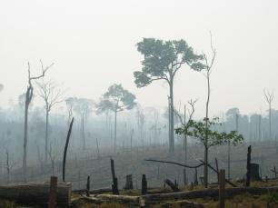 Lucha contra la deforestación y degradación y sus retos legales