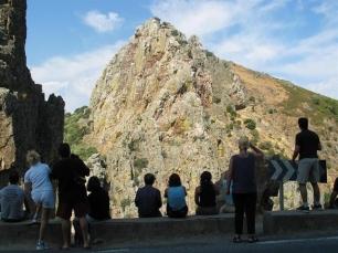 Cuatro enclaves naturales españoles, en riesgo para la conservación de las aves