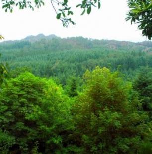 El Bosque y Yo 306_DKUO_bosques_espanoles34