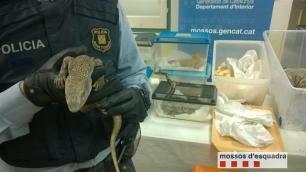 Barcelona. Hallan reptiles sin documentación al accidentarse un coche que llevaba ratas para alimentarlos