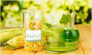 El panorama de los biocombustibles en España