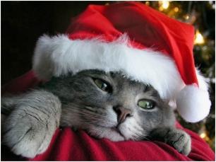 Feliz Navidad también para los animales