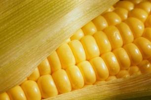 ¿Se puede producir etanol sin necesidad de maíz ni otras plantas?, la respuesta es 'afirmativo'