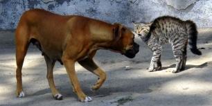 Los gatos son tan inteligentes como los perros