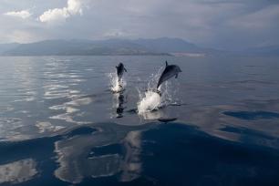 Los delfines se adaptan a los efectos de la sobrepesca