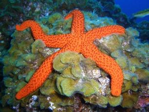 Los fondos marinos de El Hierro se recuperan a buen ritmo
