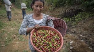 México, café, y calentamiento global