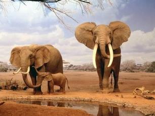 ¿Sabes cuántas horas duerme un elefante africano?