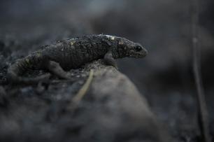 Impacto ambiental de los incendios de la Comunidad Valenciana sobre la biodiversidad