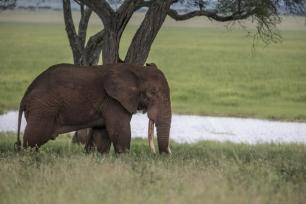 Caza furtiva de elefantes, 'malo para el planeta y malo para el bolsillo'
