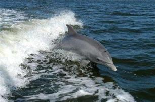 Conversaciones entre delfines