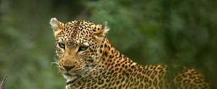 Gabón firma un acuerdo con donantes para hacer frente a la deforestación y reducir sus emisiones de carbono