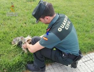 La Fiscalía pide llevar a perreras o a ONG los animales maltratados, que no podrán ser sacrificados sin autorización