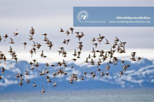 Las aves migratorias cambian sus rutas y rutinas