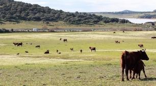 Andalucía pone en valor el carácter sostenible de la ganadería extensiva