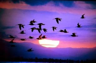 ¿Qué es el Día Mundial de las Aves Migratorias?