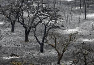 El fuego ha quemado tantas hectáreas como en todo el país el primer semestre del año