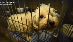 130 animales rescatados en unas condiciones pésimas