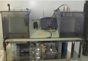 Bioelectricidad: nuevos usos en las Pilas de Combustible Biológicas para la depuración de aguas