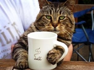 Los cafés de animales son para especies domésticas, NO para las salvajes