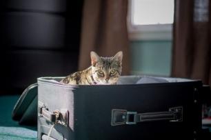 ¿Quieres que tu mascota te acompañe en avión, barco o al extranjero?